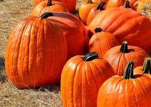 pumpkins-1572864_1920